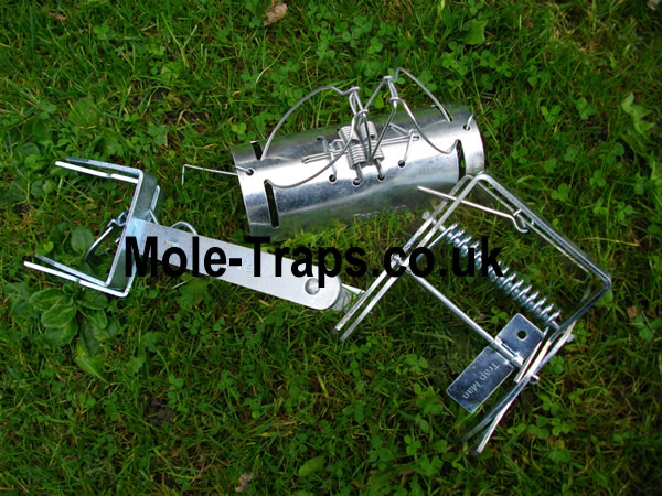 play safe and just get one of each mole trap, one tunnel mole trap , one scissor mole trap & a talpex type mole trap.